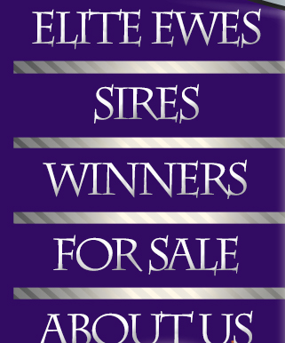 Sires - Winners - For Sale - About Us